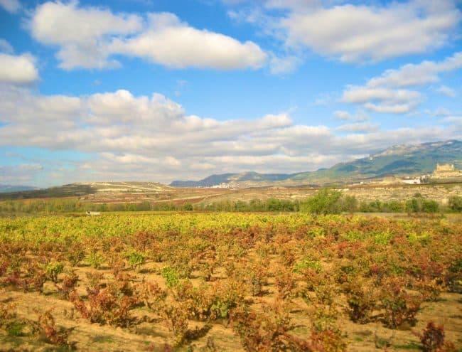 Countryside in La Rioja