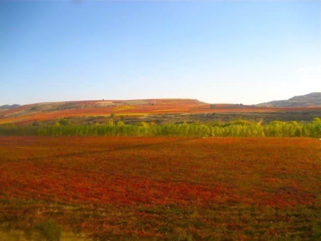 Fields in La Rioja