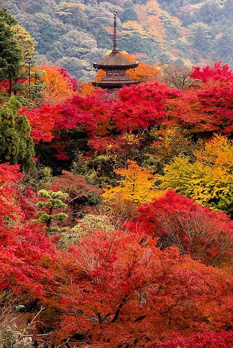autumn around the world