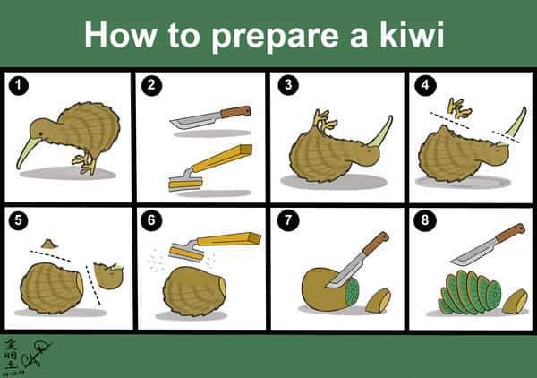 Kiwi bird cut open - photo#13