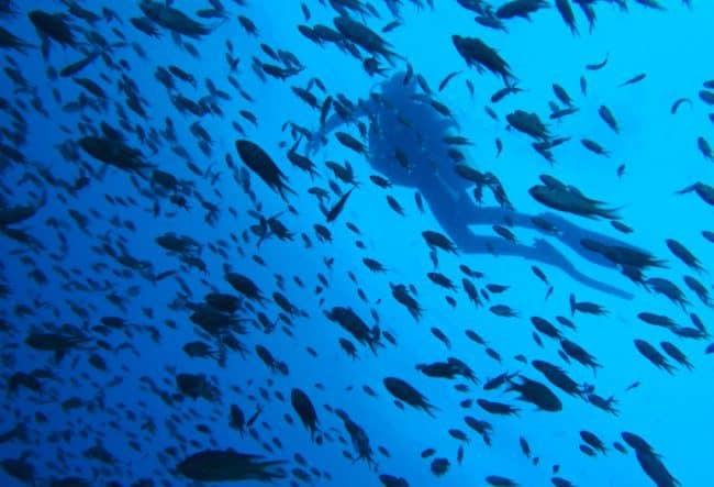 diving koh tao thailand