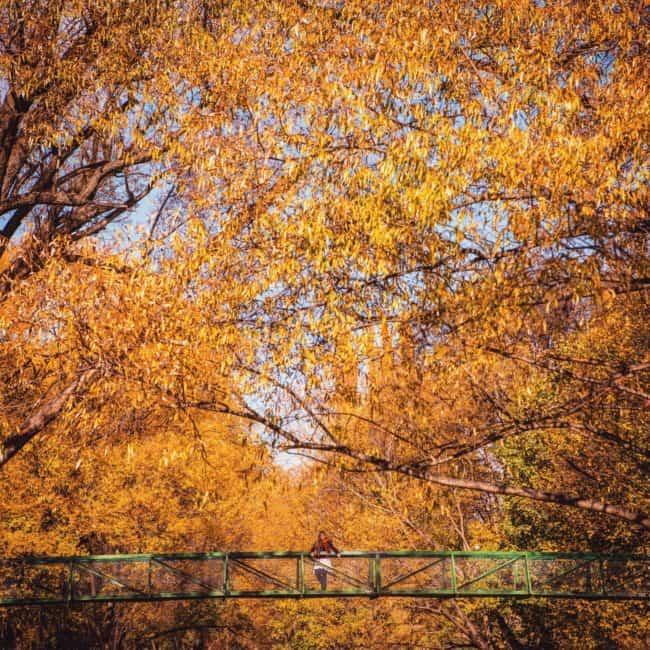 Autumn new zealand