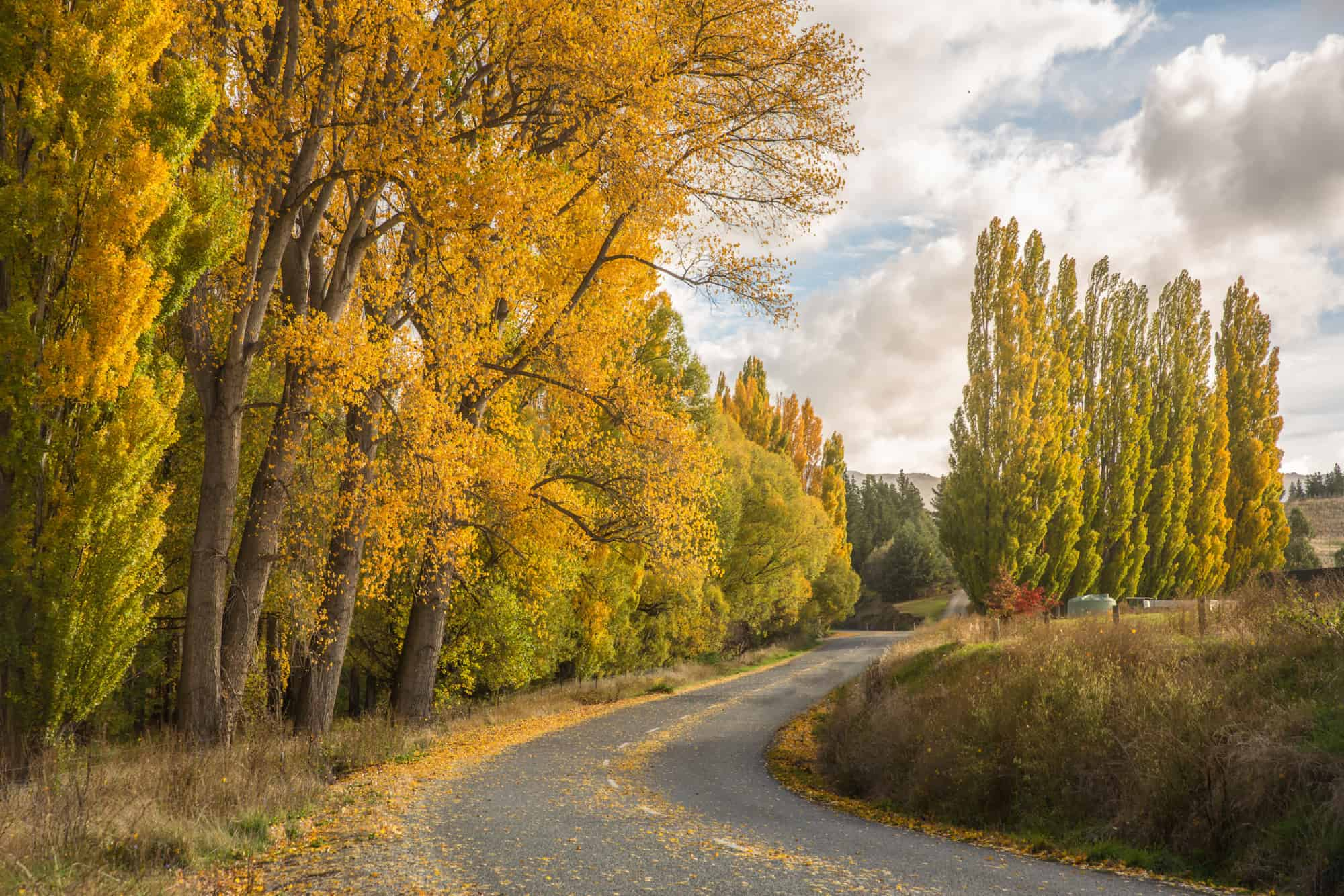 central otago autumn