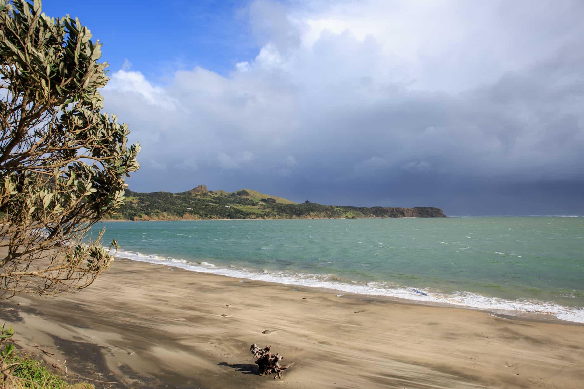 glamping kauri coast