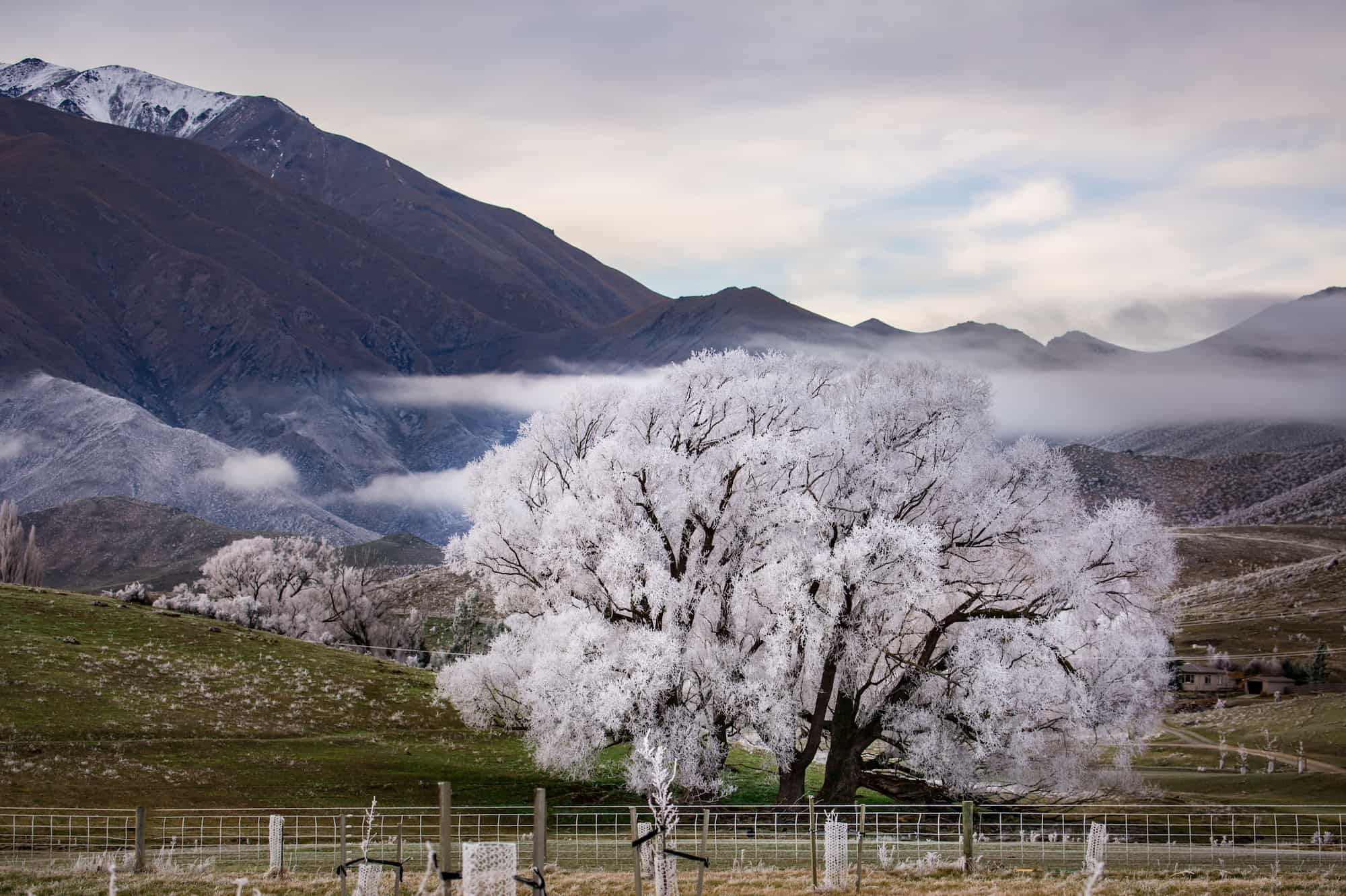 winter new zealand