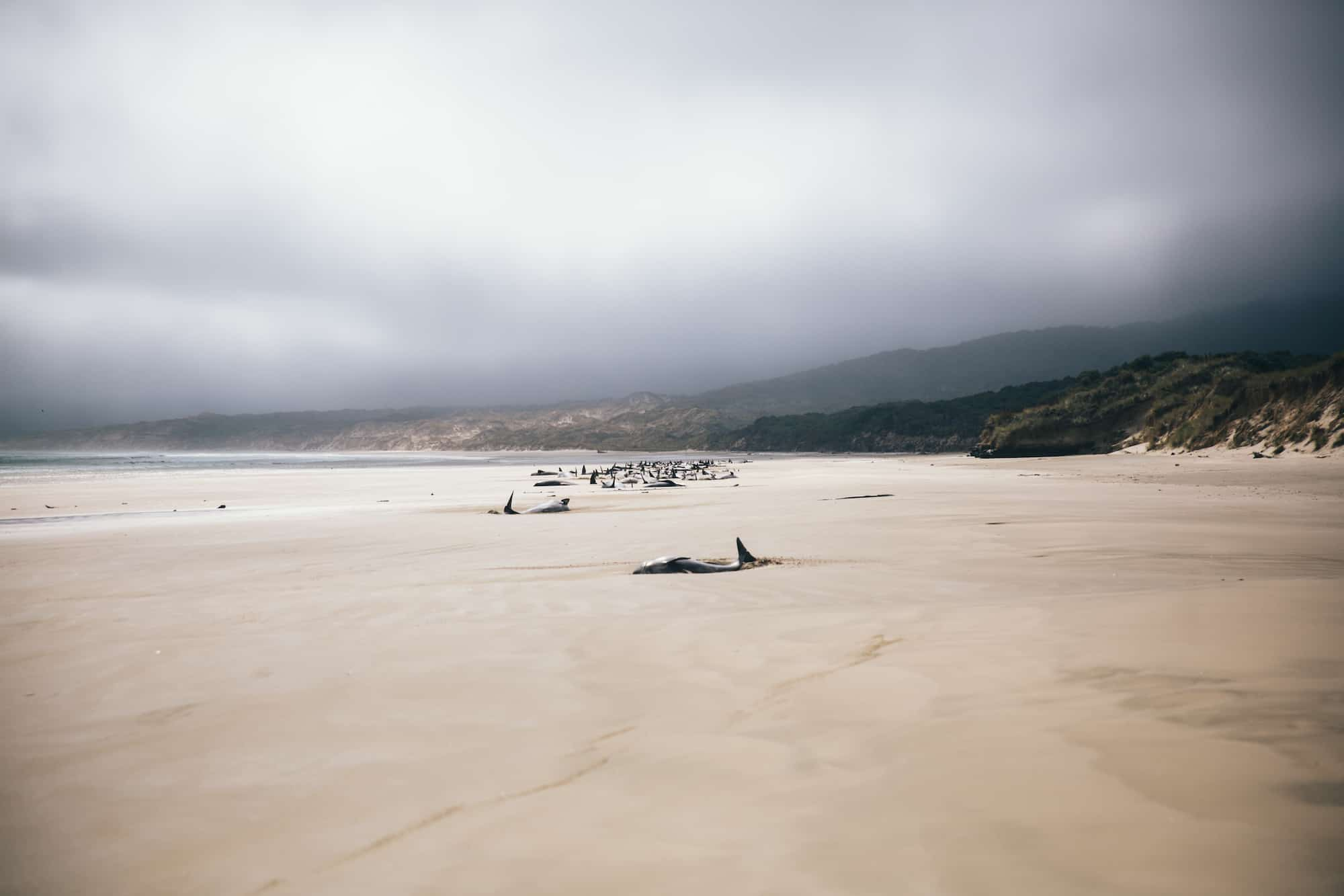 stranded whales