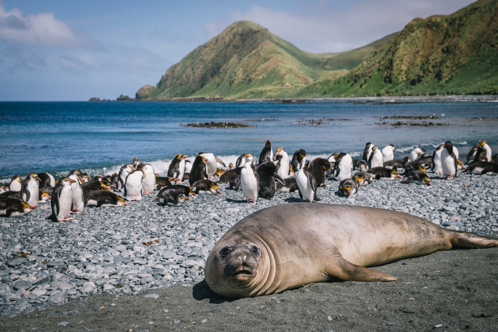 subantarctic islands travel
