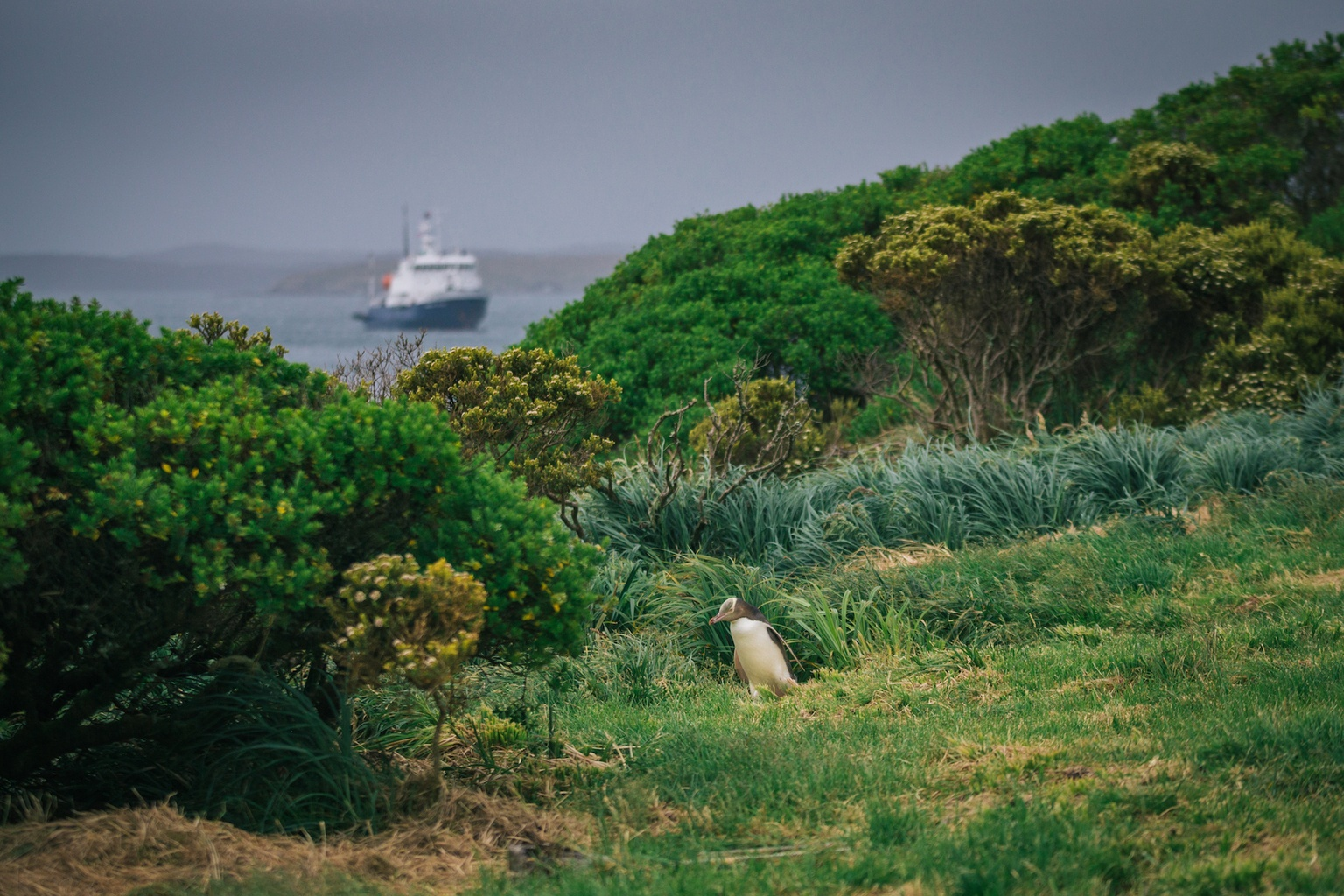auckland islands travel