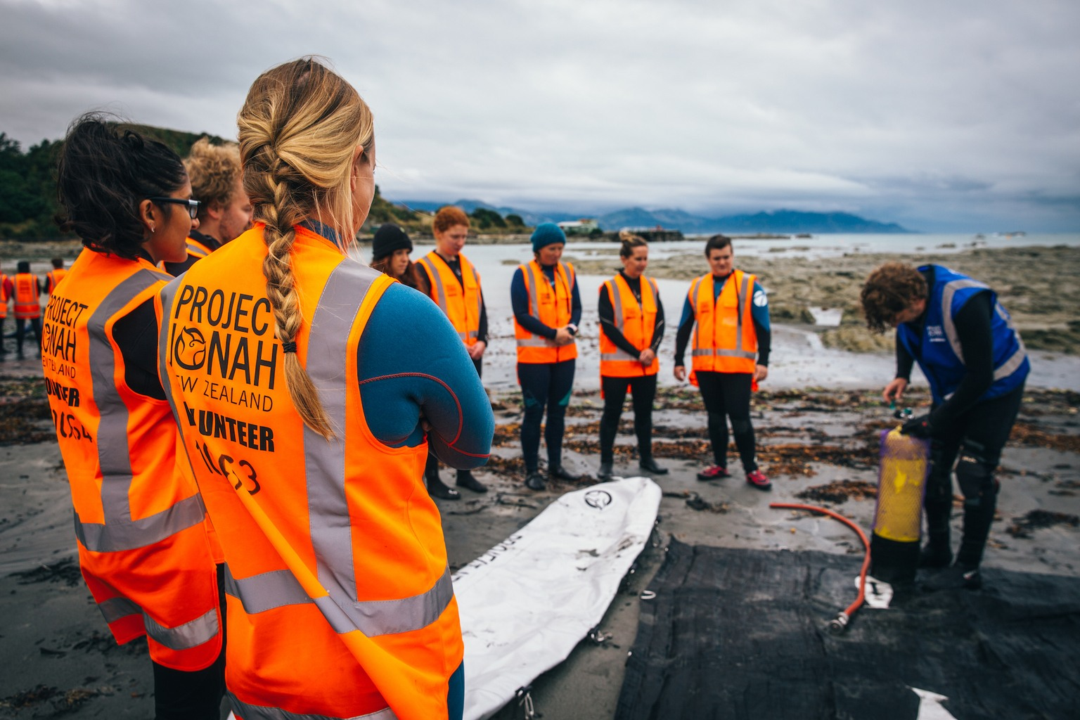 volunteer whale stranding new zealand
