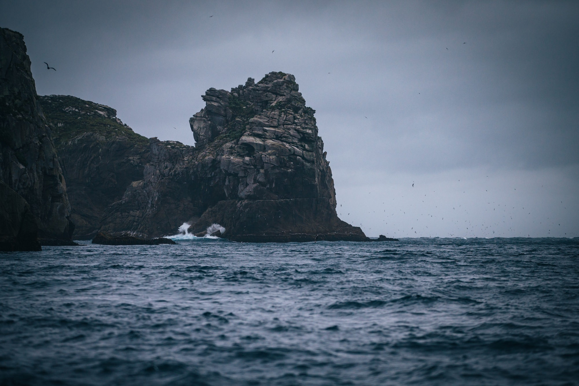 the snares islands