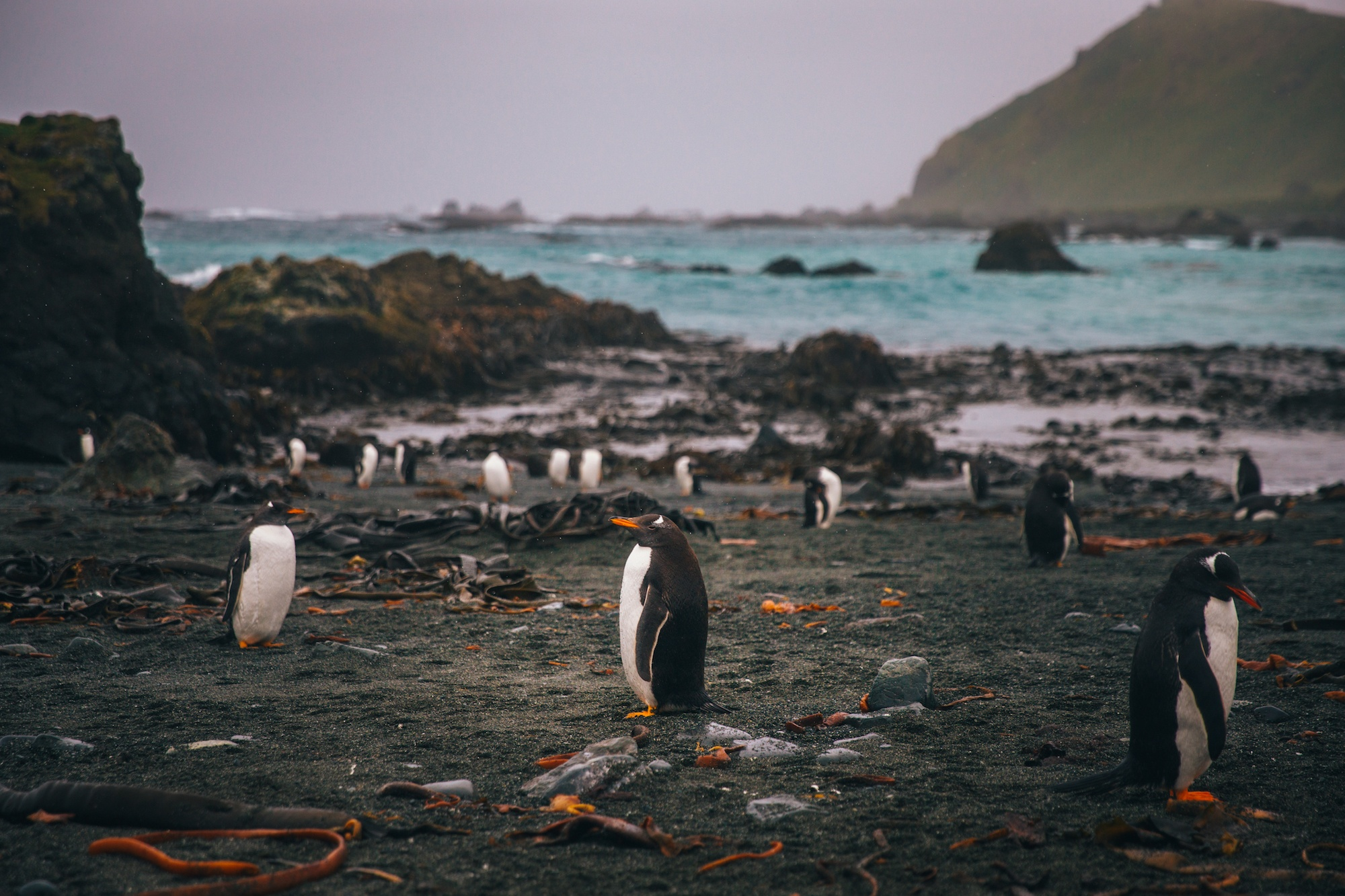 visit Macquarie island