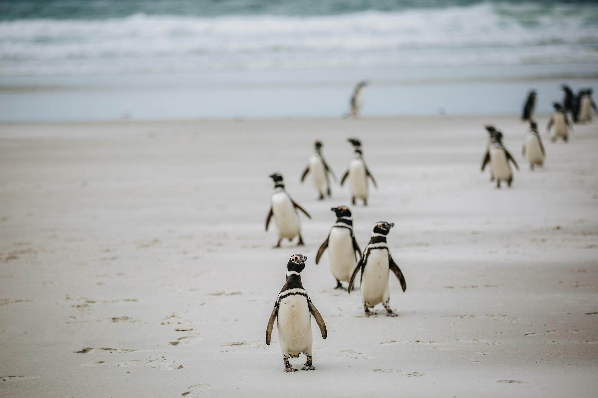 antarctic studies