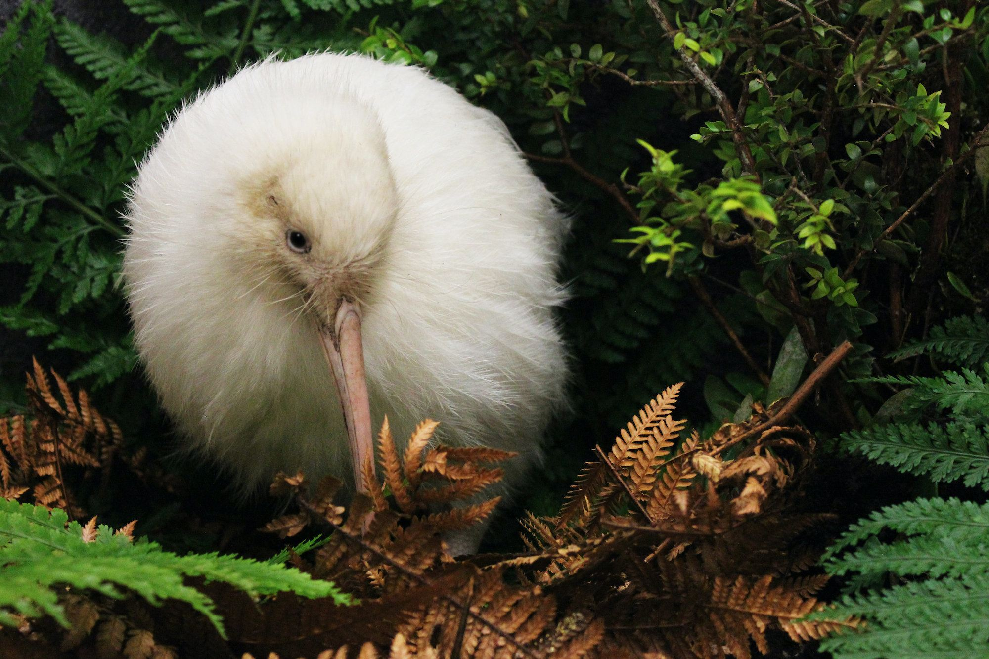 new zealand ecosanctuaries