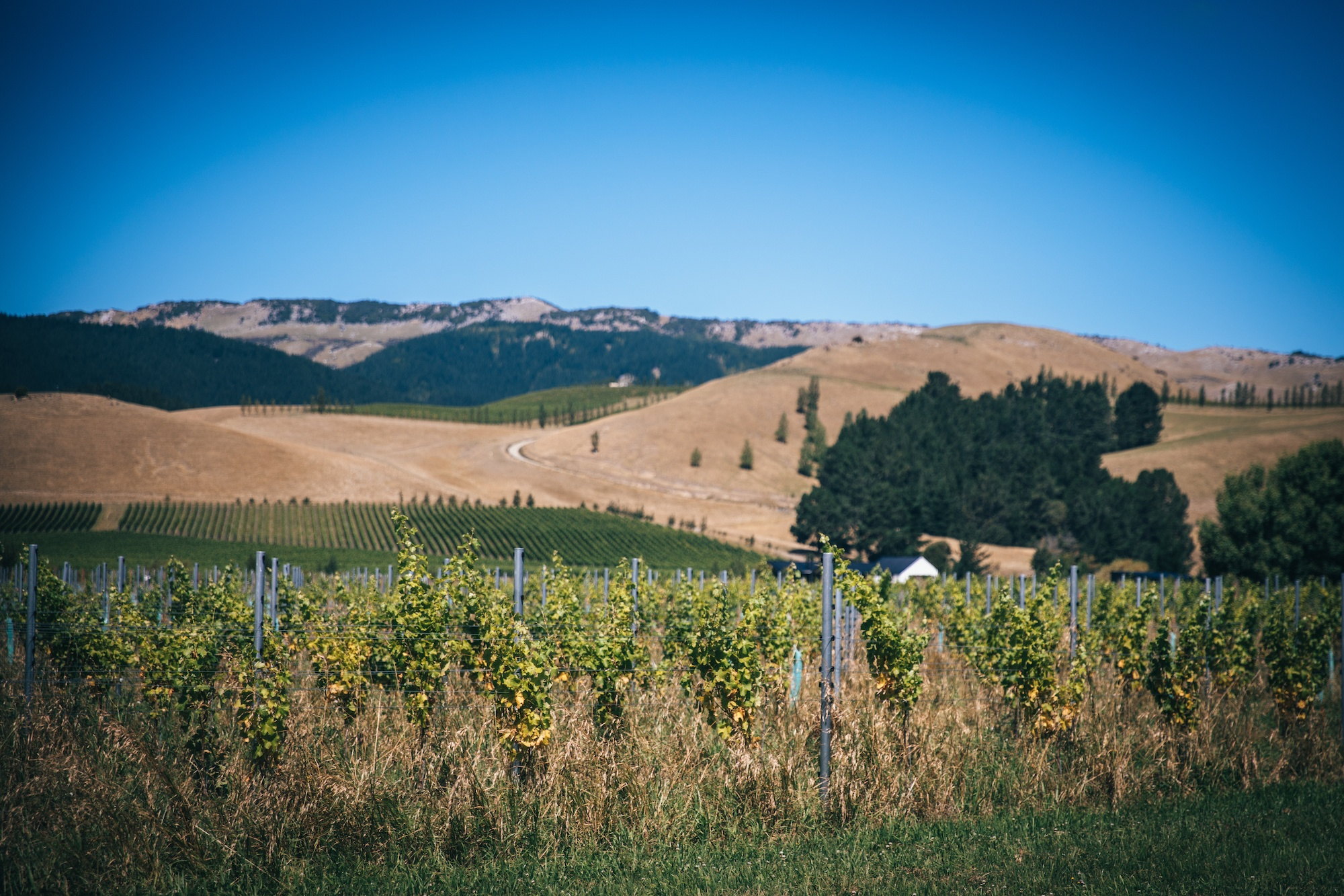 vineyards of north canterbury
